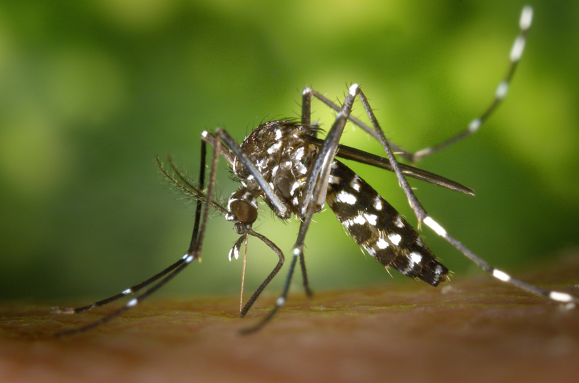 disinfestazione da zanzara tigre